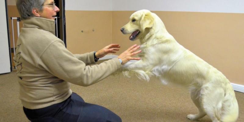 Hunde spielen mit Hunden UND mit Menschen - oder?