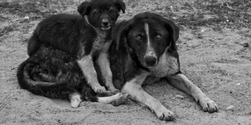 Der gebrauchte Hund - Hund mit Geschichte