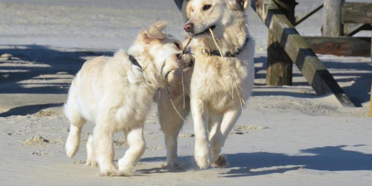 Beschäftigung mit und für Hunde -  warum weniger oft mehr ist....